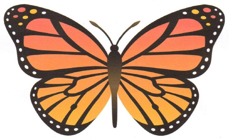 Patterns For Flapping Butterflies Beauteous Butterfly Pattern