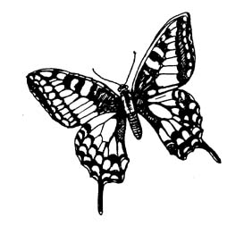 Butterfly Clip Art Black And White