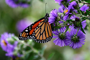 monarch life cycle lesson plan