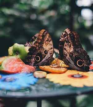 Butterfly Farming and Ranching
