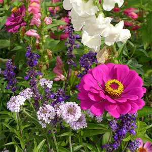 howto plant a butterfly garden