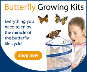 Butterfly Growing Kits