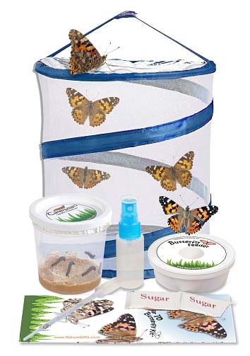 Live Butterfly Kit from Nature Gift Store, 5 caterpillars