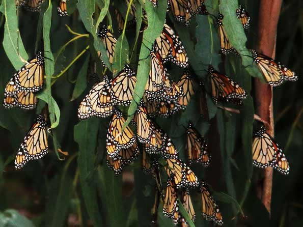 Butterfly Eco Tours